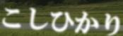 山形県産コシヒカリ!本場・新潟産にもひけをとりません!